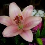 flores-borja-1-1600x1200